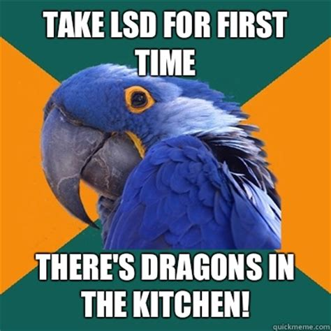 Lsd Memes - take lsd for first time there s dragons in the kitchen paranoid parrot quickmeme