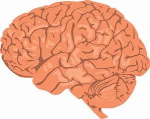 Free to Use & Public Domain Brain Clip Art