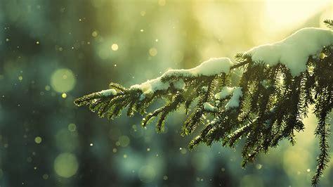 snowy tree bokeh hd wallpaper 187 fullhdwpp full hd