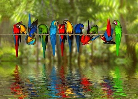 bird colors many colored birds the water reflections colors