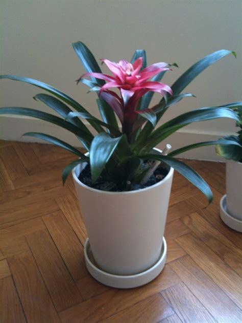 Plante D Ombre En Pot