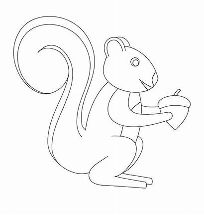 Squirrel Nut Coloring Nuts Draw Drawing Pages