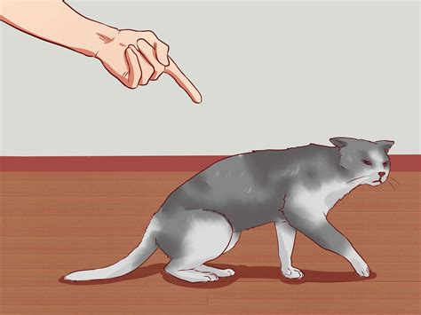 cat  waking    steps  pictures