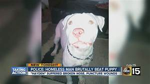 7-month-old pit bull brutally beaten in Phoenix - YouTube