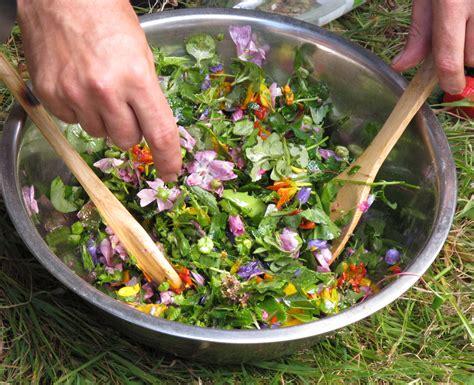 découverte des plantes sauvages et comestibles d 39 auvergne