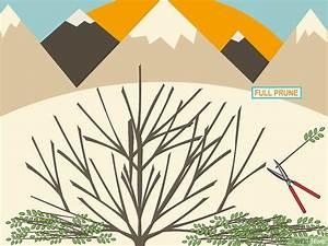 Taille De L Hibiscus : comment tailler un hibiscus 10 tapes ~ Melissatoandfro.com Idées de Décoration