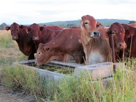 grazing bmp format designed busy graziers fitzroy basin