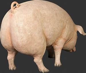 Fat Pig Statue
