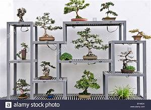 bonsai greenhouse display stockfotos bonsai greenhouse With garten planen mit bonsai display