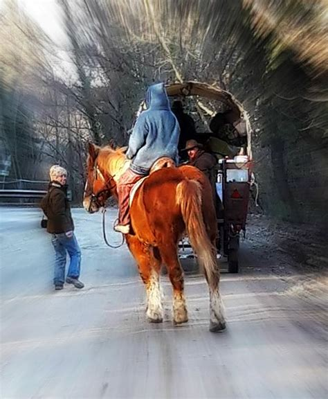carrozze cavalli usate viaggio in carrozza sull amiata carrozze cavalli