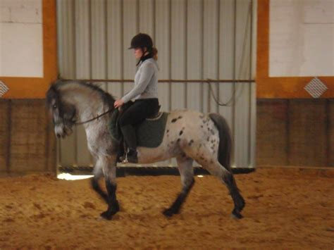 chevaux  poneys  vendre tout sur le cheval