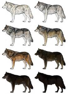 Drawing Wolf Fur Colors