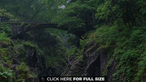 Old Bridge In The Woods 4k Wallpaper