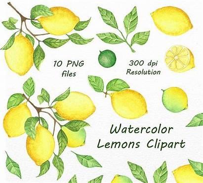 Lemon Watercolor Lemons Clipart Digital Clip Hand
