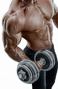 Anabolic Steroids  Its Uses As An Ergogenic Aid  U0026 Their Abuse In Sports