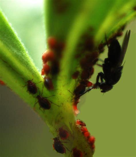 insecten permaculturenl
