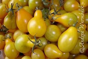 Tomaten Blätter Gelb : tomaten atlas detailansicht gelbe dattelweintomate ~ Frokenaadalensverden.com Haus und Dekorationen
