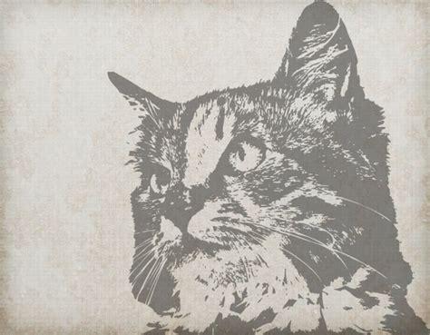 cat portrait vintage background  stock photo public