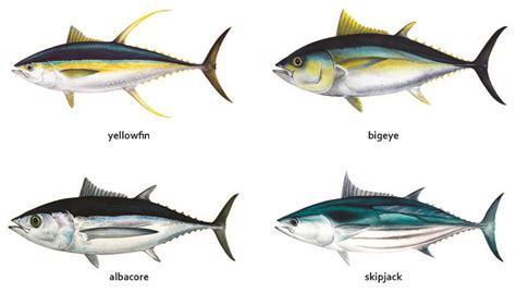 fisheries   pacific overview  tuna fisheries