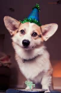 Happy Birthday Corgi