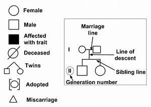 Pedigree Charts Explained