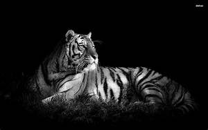 Tiger HD Wallpaper | Abstract | Pinterest | Tiger ...