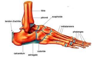 Pied De Le by Fracture Calcan 233 Um Chirurgie Traumatologique Et