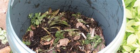 a thirsty gardeners guide to garden compost two