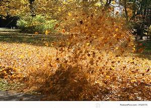 Image Of Leaves Blowing