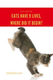 do cats 9 lives cat myth why is it said they nine lives fully feline