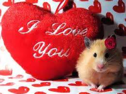 Extremely Cute Valentines Day Animals | Funny And Cute Animals