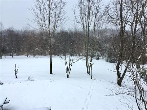 Snow Day In Virginia  Bearing Drift