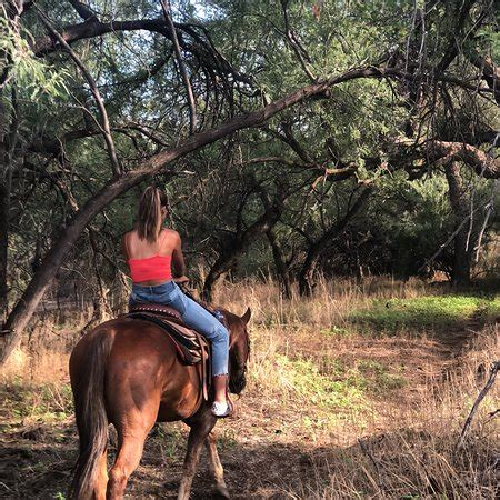 tucson horseback riding tripadvisor houston go arizona