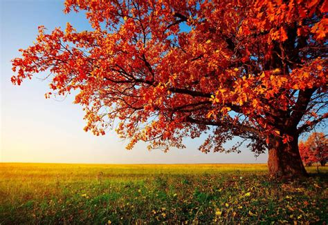 Beautiful Autumn Trees Wallpapers by Autumn Trees Wallpapers Wallpaper Cave