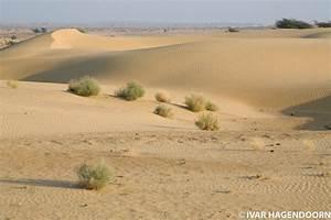 Image Gallery thar desert