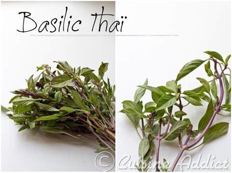 basilic cuisine zoom sur le basilic thaï cuisine addict