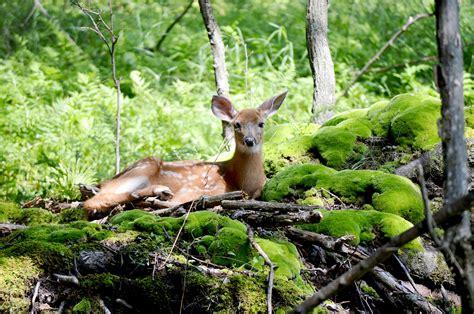 ethical wildlife photographer parks blog