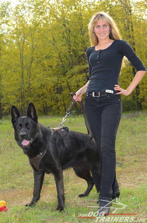 buy german shepherd agitation protection leather dog harness
