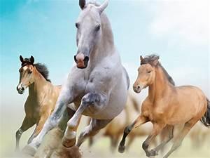 Horses, Gallop, On, The, Desktop, Wallpapers13, Com
