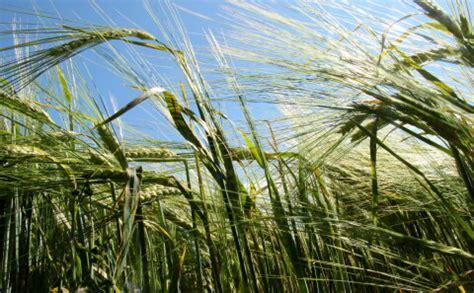 Latvija lūdz Eiropu kompensēt sausuma radītos zaudējumus lauksaimniekiem 350 miljonu eiro apmērā ...