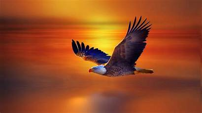 Desktop Eagle Widescreen Sky Sunset Bald Flight