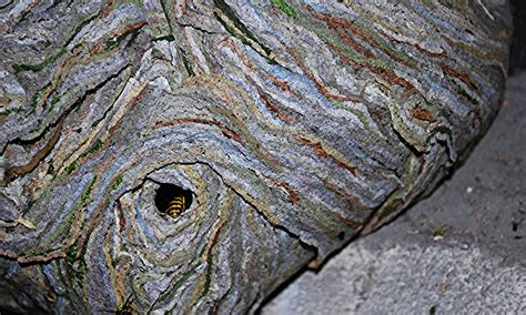 wespennest im rolladenkasten wespennest