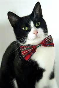cat bow tie the cat bow tie