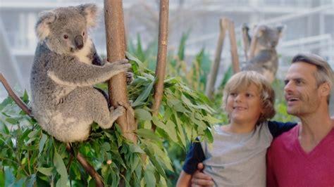 zoo sydney wild koala australia ellaslist experience events atracciones