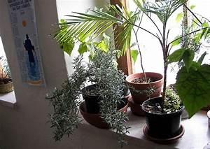 Pflanzen Im Treppenhaus : berwinterung von k belpflanzen im treppenhaus 04 rosmarin ~ Orissabook.com Haus und Dekorationen