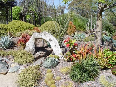 succulents garden ideas beautiful succulent garden