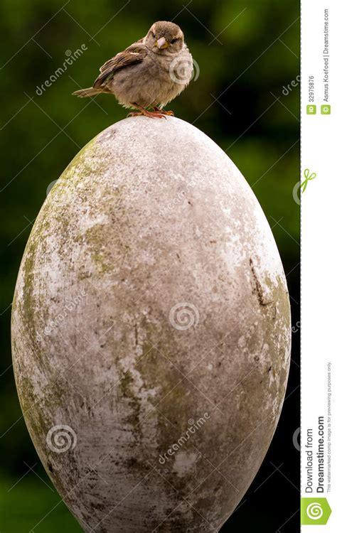 small bird big egg royalty  stock image image