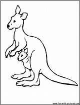 Kangaroo Coloring Australian Animals Printable Drawing Wallabies Kangaroos Clipart Australia Cartoon Wallaby Soliz Jerome sketch template