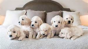 THE CUTEST PUPPIES EVER ! ! ! - YouTube  Cutest
