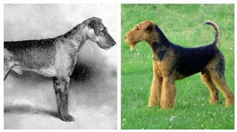fascinating    dog breeds looked   years   today